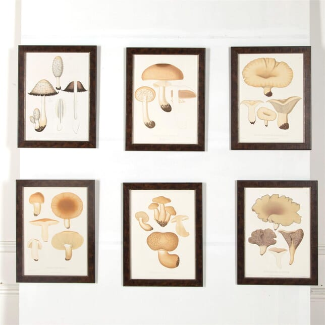 Set of Six Mushrooms Lithographs WD607001