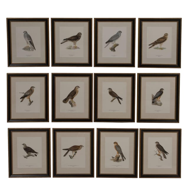 Set of Twelve Swedish Chromolithographs of Birds of Prey WD6061641