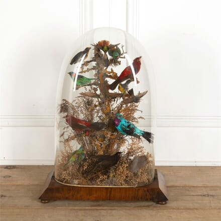 Glass Domed Taxidermy of Fifteen Exotic Birds DA287373