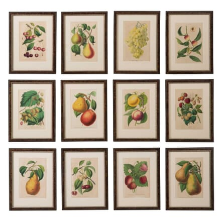 Set of Fruit Chromolithographs WD6057548