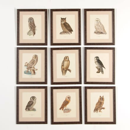 Collection of Nine Swedish Owls WD608643